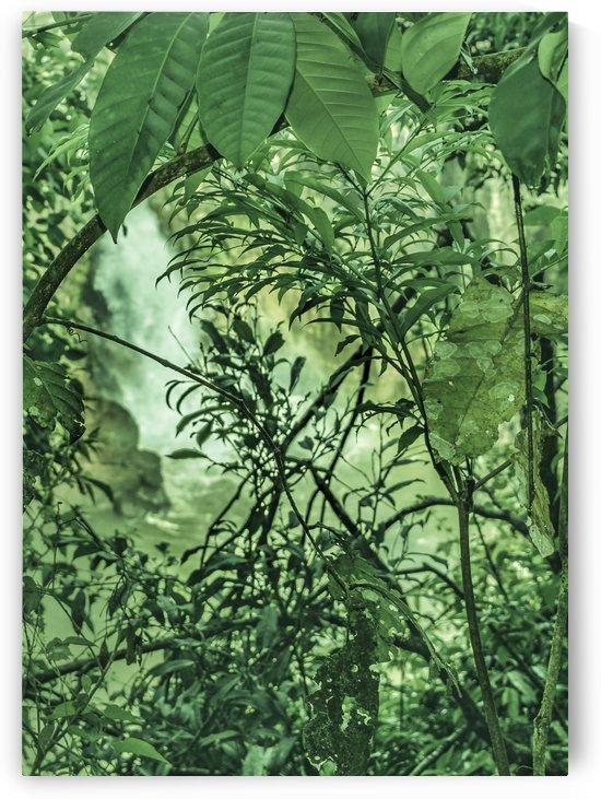 Jungle Detail at Iguazu Park Photo by Daniel Ferreia Leites Ciccarino