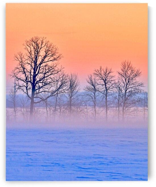 Portrait of a Frosty Foggy Morn  by Bern E King Photography