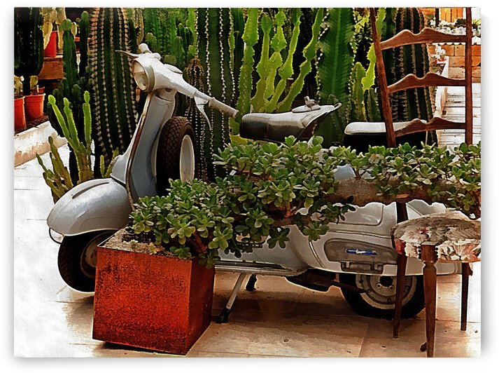 Vespa As Part Of Succulent Display by Dorothy Berry-Lound