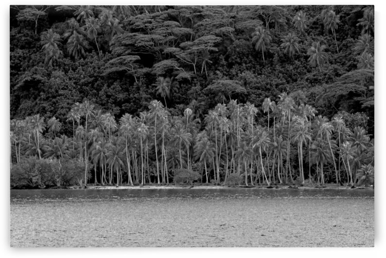 Tahaa Hillside Black and White by Jim Dodson