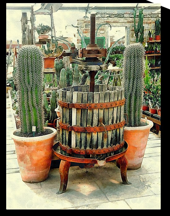 Old Wine Press Used in Succulent Display by Dorothy Berry-Lound