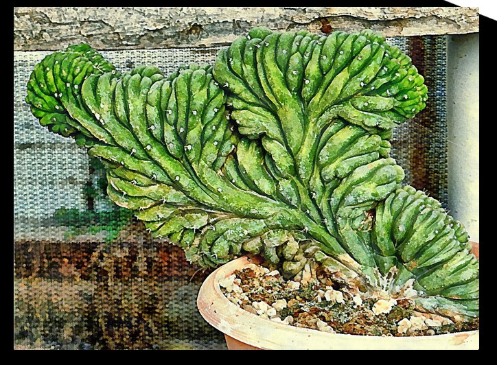 Glorious Coral Cactus by Dorothy Berry-Lound