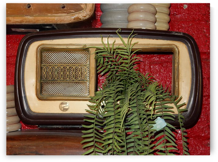 Old Radio Used For Succulent Display by Dorothy Berry-Lound