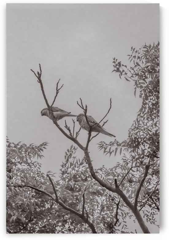 Couple of Parrots in the Top of a Tree by Daniel Ferreia Leites Ciccarino