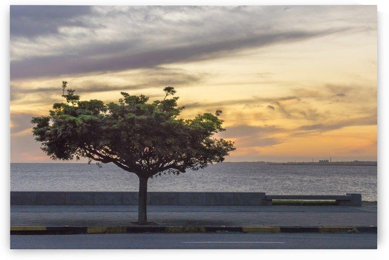 Sunset Scene at Boardwalk in Montevideo Uruguay by Daniel Ferreia Leites Ciccarino
