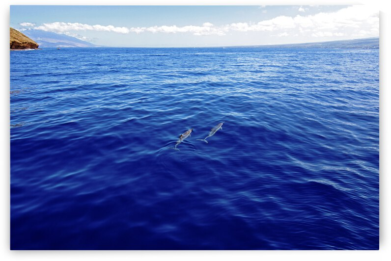 Dolphins in The Blue by Christopher
