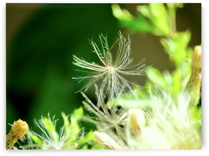 Air Seed by S E Koenig