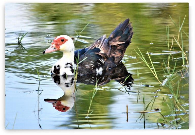 Duck Duck by Barbara J Durham Creations