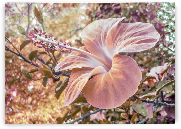Fantasy Colors Hibiscus Flower Digital Art by Daniel Ferreia Leites Ciccarino