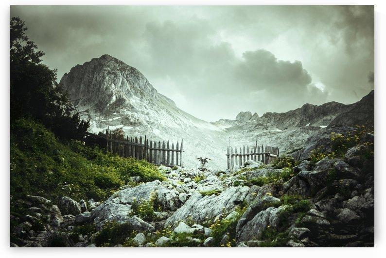 Gatekeeper  by Marko Radovanovic