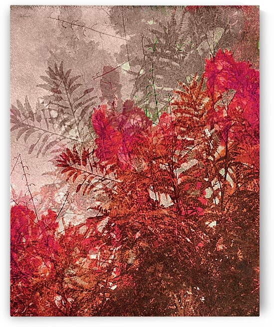 Decorative Leaves Photo Collage by Daniel Ferreia Leites Ciccarino