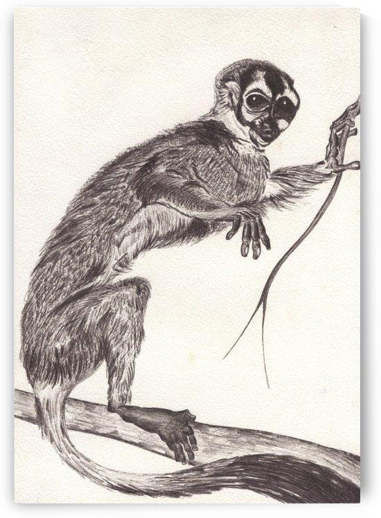 Little monkey by Jeff Hibbard