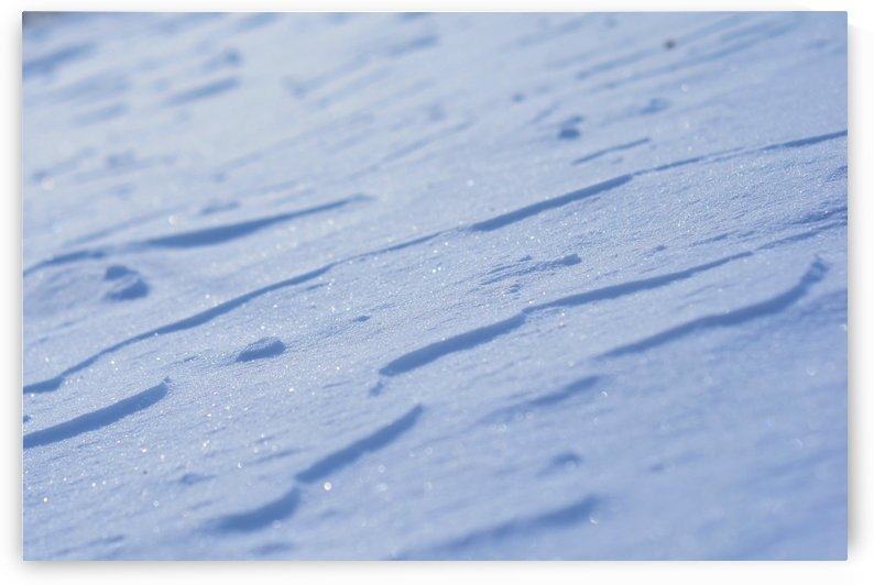 Blue snow blanket in the evening light by Codrina Miculit