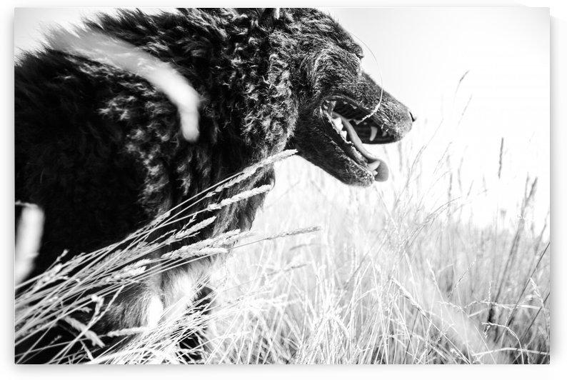 Wild days by Marko Radovanovic