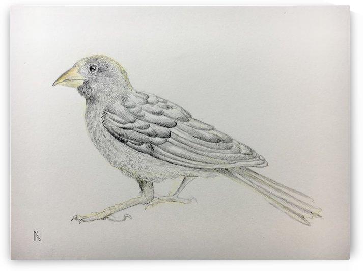 Bird by Aria