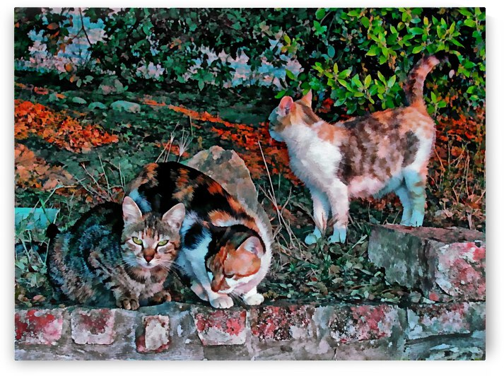 Three Buddies At Sunset by Dorothy Berry-Lound