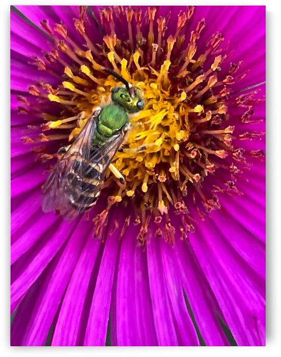 Green metallic bee by OurBackArt