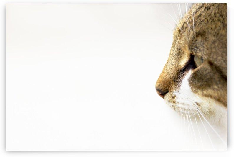 Eyes of prey by Marko Radovanovic