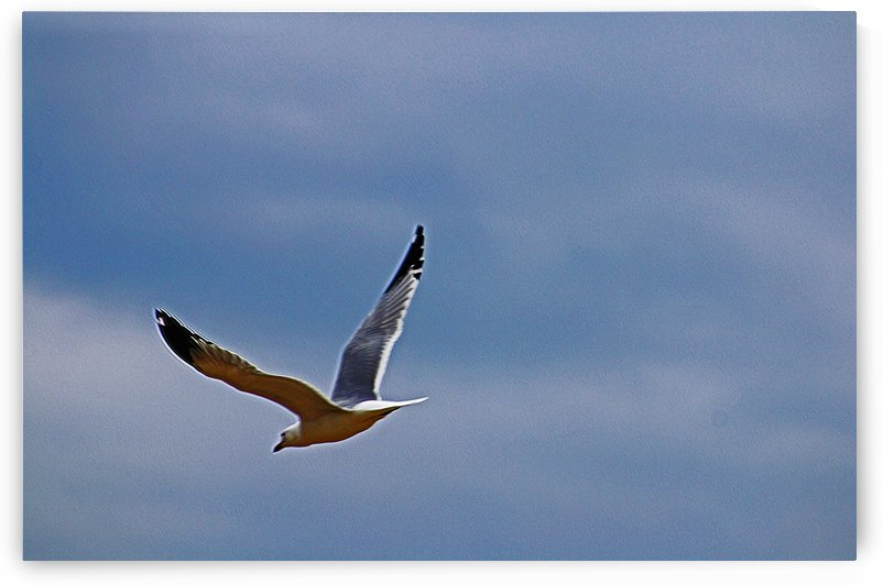Incoming Flight by Don  Baker