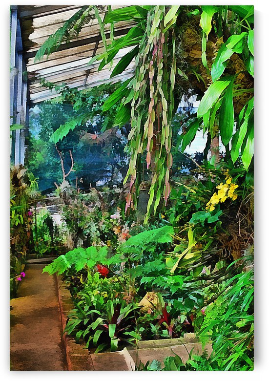 Orchid House 1 by Dorothy Berry-Lound
