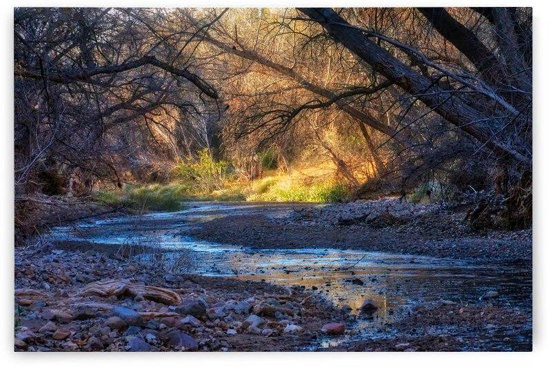 Cienega Creek Preserve by Eduardo Palazuelos