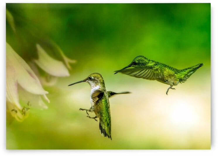 Emerald Hummingbirds by Bob Orsillo