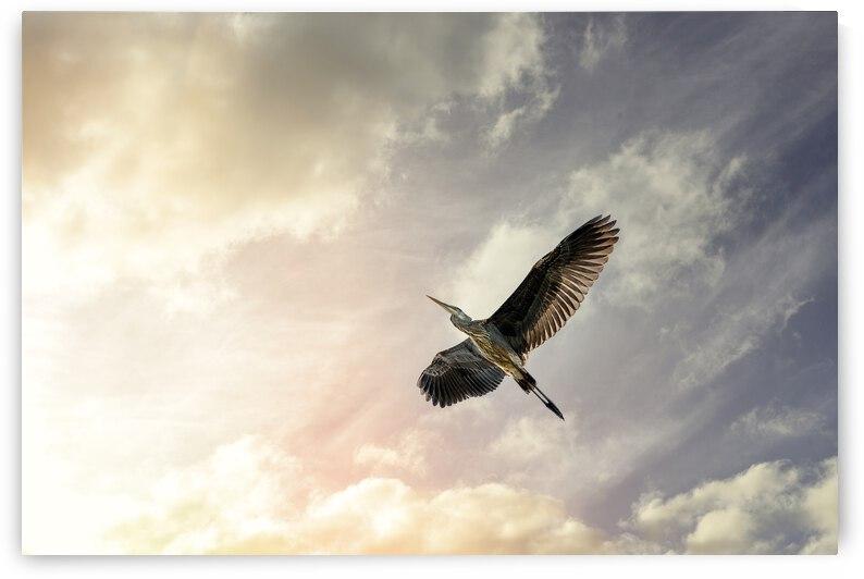 Heron Sunrise by Bob Orsillo
