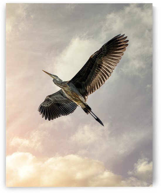 Flight Of The Heron by Bob Orsillo