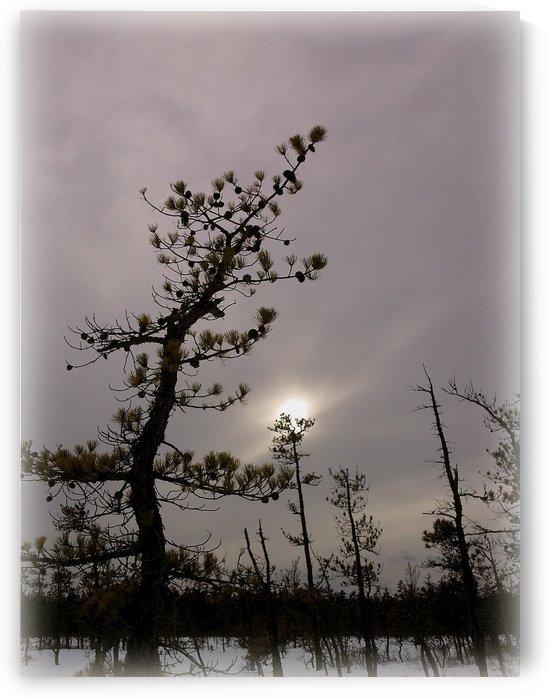 Winter sky by Sue Bonior