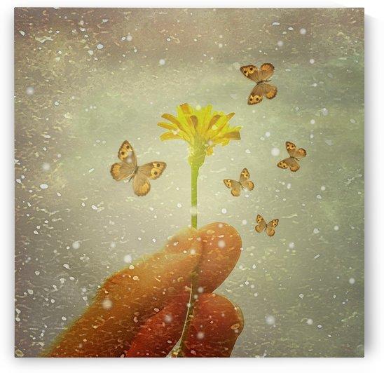 Butterflies Charmer by Daniel Ferreia Leites Ciccarino