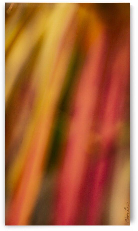 Flamboyantes Graminees  no. 8 - Flamboyant Grasses no. 8 by Pierre Cavale