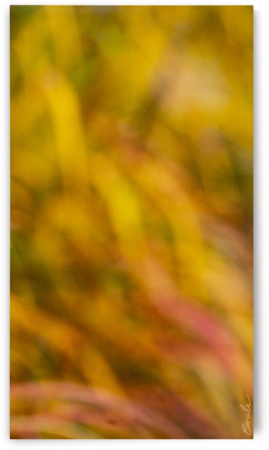 Flamboyantes Graminees  no. 7 - Flamboyant Grasses no. 7 by Pierre Cavale