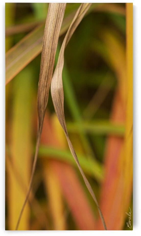 Flamboyantes Graminees no. 5 - Flamboyant Grasses no. 5 by Pierre Cavale