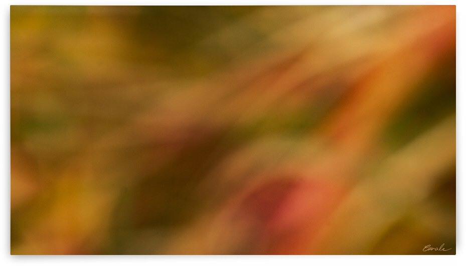 Flamboyantes Graminees no. 4 - Flamboyant Grasses no. 4 by Pierre Cavale