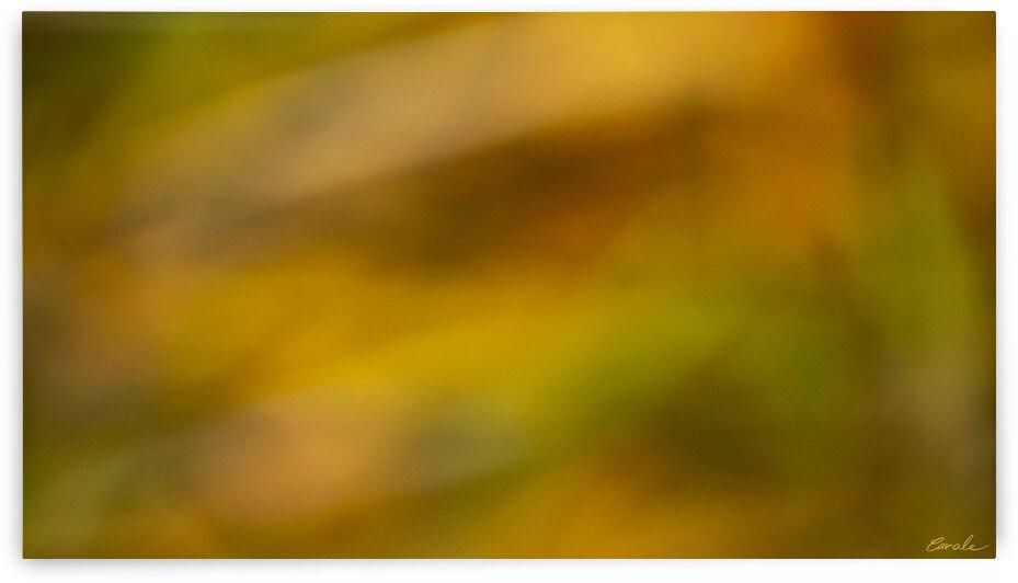 FLAMBOYANTES GRAMINEES NO. 3 - FLAMBOYANT GRASSES NO. 3 by Pierre Cavale