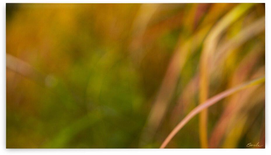 FLAMBOYANTES GRAMINEES NO. 2 - FLAMBOYANT GRASSES NO. 2 by Pierre Cavale