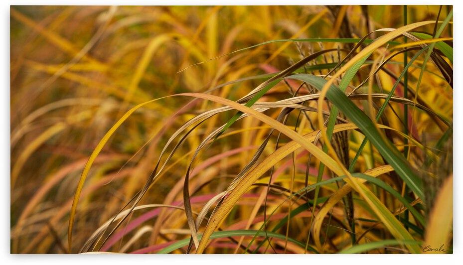 FLAMBOYANTES GRAMINEES NO. 1 - FLAMBOYANT GRASSES NO. 1 by Pierre Cavale