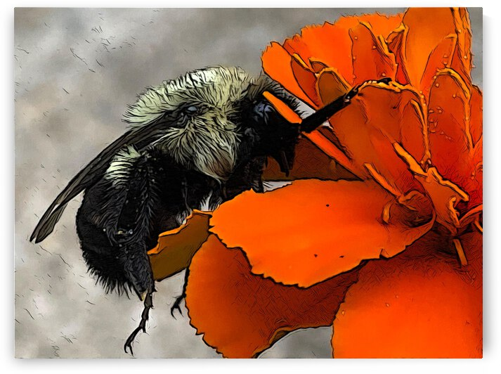 Sleeping Bumblebee  by OurBackArt