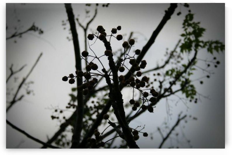 Nature - 06 by Digitalu Photography