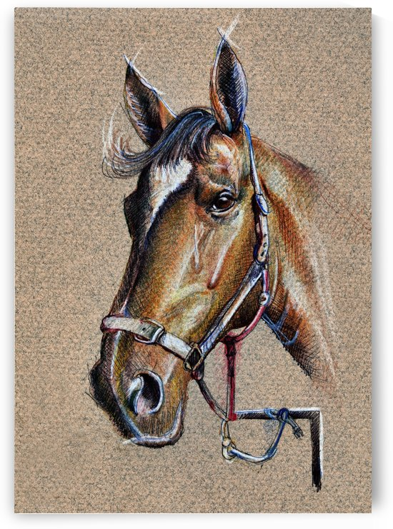 Horse Drawing Portrait by Daliana Pacuraru