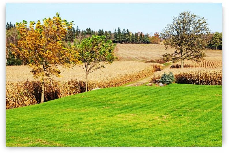 Corn Harvest Time by Deb Oppermann