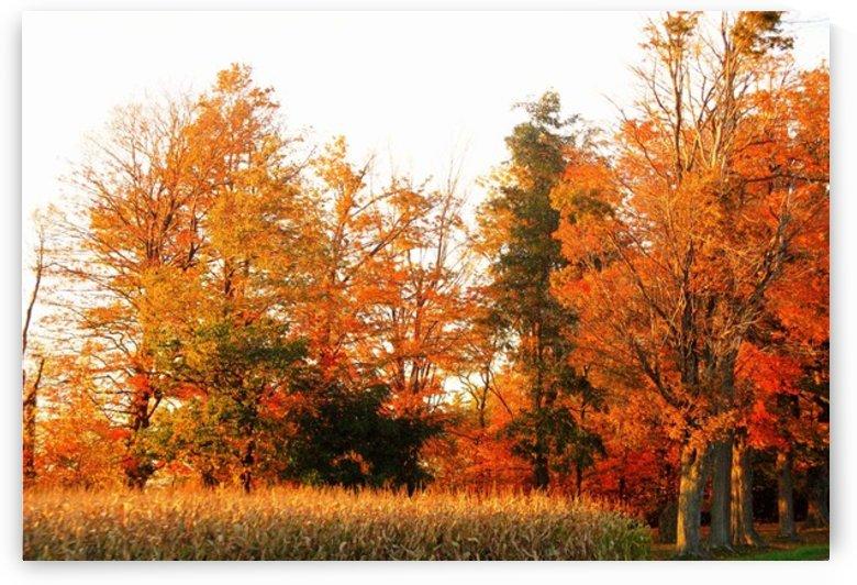 Trees of Fall by Rhonda M Barrett
