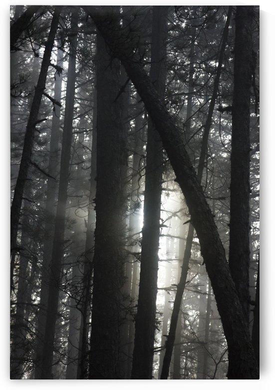 Forest ecosystem  by Marko Radovanovic