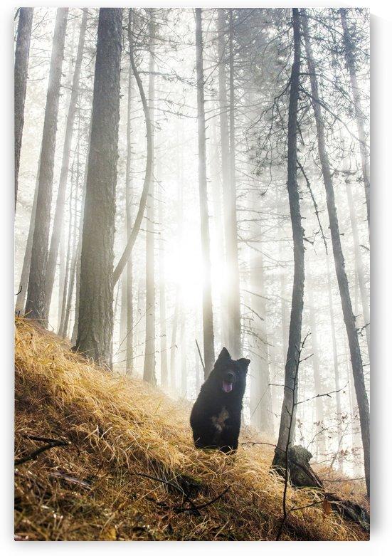Morning visitor  by Marko Radovanovic