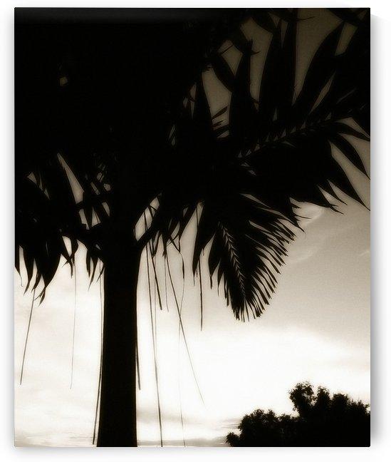 Nature - 13 by Digitalu Photography