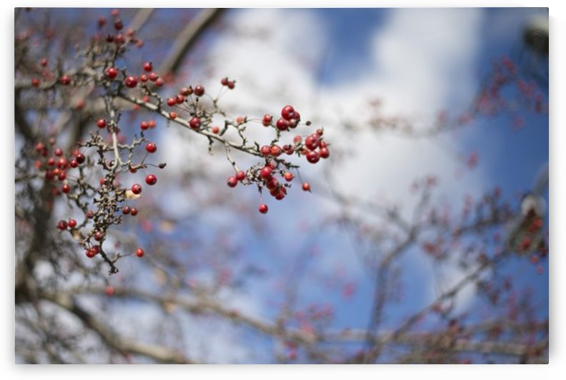 Berries by katie tremblay