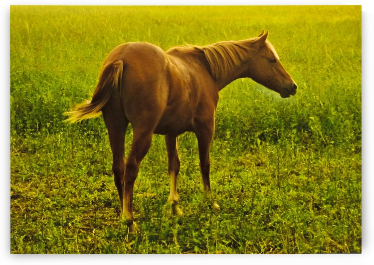 Brown Horse in the Field by Daniel Ferreia Leites Ciccarino