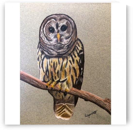 Owl by Rebb Arts
