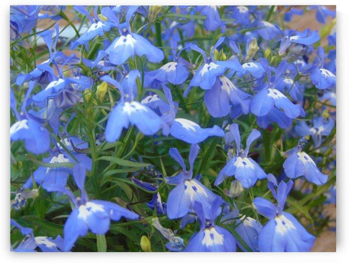 Blue Butterfly by Kyla E  Duhart
