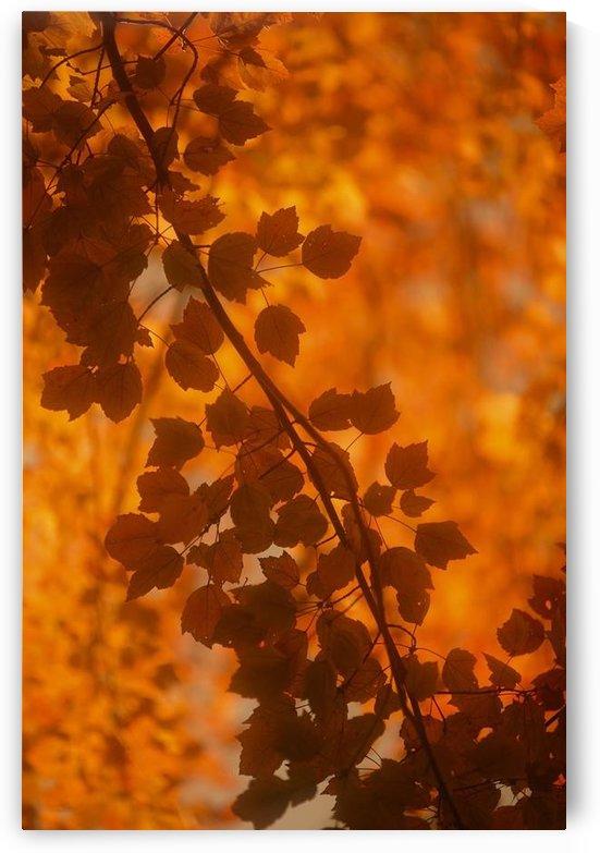 landscape_2_0428 by Stock Photography